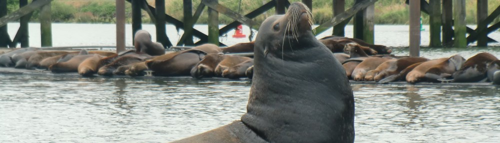 cropped-sea-lion-side-bar.jpg