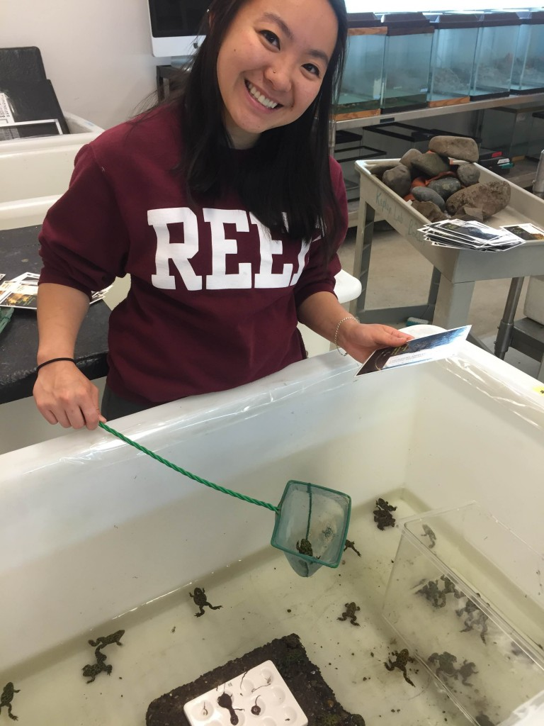 Jasmine working in the Reed Population Ecology and Biology Lab with Bombina orientalis.