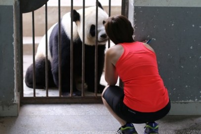 Giant Panda Internships NOW OPEN